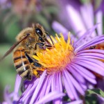 The buzz on neonicotinoids