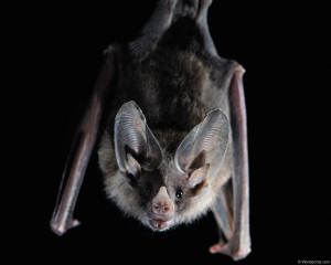 bat_high_resolution_desktop_1280x1024_wallpaper-247989