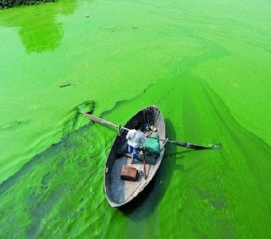 A cyanobacterial bloom in Chao Hu, the fifth largest freshwater lake in China