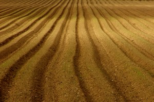 ploughed