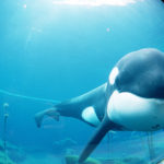 Freeing Willy: the $20 million failed experiment